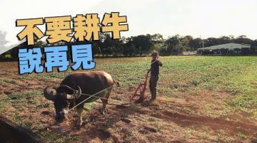 我們的島 第979集 不要耕牛說再見(2018-11-05)