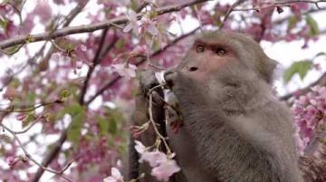 0311我們的島 猴其無辜