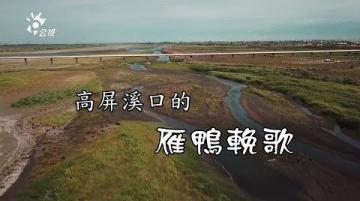 我們的島 高屏溪口的雁鴨輓歌(第996集 2019-03-18)