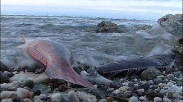 我們的島 綠島死魚之謎(第442集 2008-02-29)