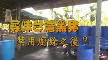 我們的島 尋味台灣黑豬-禁用廚餘之後?(第999集 2019-04-08)
