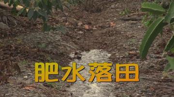 我們的島 肥水落田(第1012集 2019-07-08)