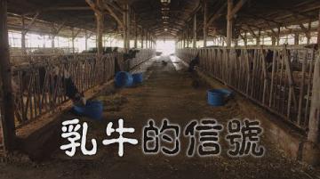 我們的島 乳牛的信號(第1019集 2019-09-02)