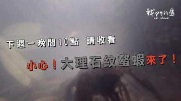 【🚨預告 小心❗大理石紋螯蝦來了❗公視 我們的島 2020-10/26晚間十點播出】
