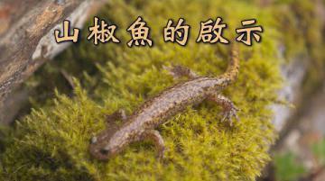 【山林解禁】山椒魚的啟示 近山、敬山的距離  (第1078集 2020-10-26)