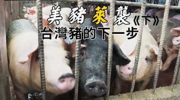 【瘦肉精】美豬「萊」襲|台灣豬的下一步《下》(我們的島 第1094集 2021-03-01)