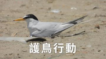 【鳥類保育】護鳥行動|保持距離降低干擾 (我們的島 1110集 2021-06-21)