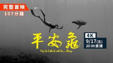 【#網路首播 平安龜完整版107分鐘 滿滿的海龜放送💦 中英字幕4K紀錄片】May Sea Turtles Be with You … Always