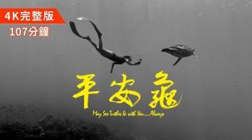 【#平安龜完整版107分鐘 滿滿的海龜放送💦 中英字幕4K紀錄片】May Sea Turtles Be with You … Always