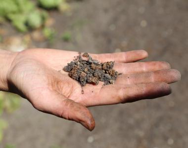 牛糞加工成的有機肥