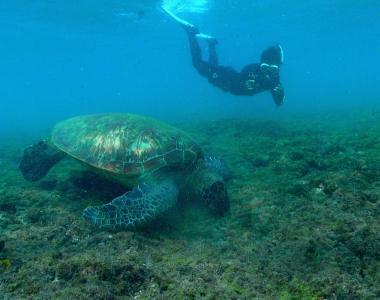 蘇淮拍攝海龜