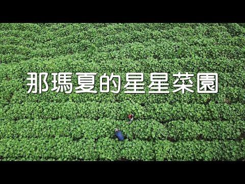 【螢火蟲復育】那瑪夏的星星菜園 照亮返鄉青年的路(我們的島 1114集 2021-07-19)