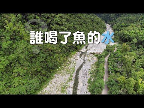 【水資源】誰喝了魚的水|新武呂溪的日本禿頭鯊、大吻鰕虎不見了! (我們的島 1126集 2021-10-11)
